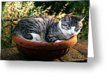 Cat In A Flowerpot Greeting Card