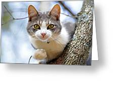 Cat In A Tree Greeting Card