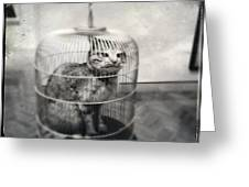 Cat In Cage Greeting Card