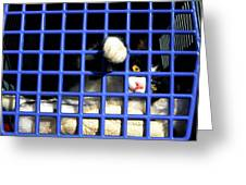 Cat In Pet Carrier Greeting Card