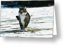 Cat In The Snow Greeting Card