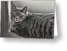 Cat In Window Greeting Card