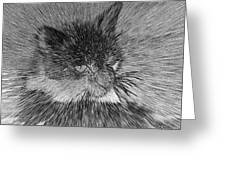 Cat - India Ink Effect Greeting Card