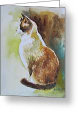 White And Brown Cat Greeting Card