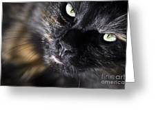 Cat Looking Up Greeting Card