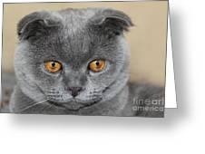 Cat Martin Greeting Card