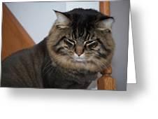 Cat Nap Time Greeting Card
