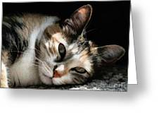 Cat Napping In The Sun By David Perry Greeting Card