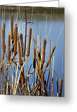 Cat Nine Tails Greeting Card