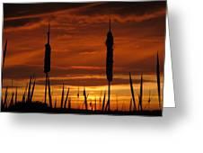 Cat Nine Tails Sunset Greeting Card