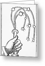 Cat-o'-nine-tails, 1552 Greeting Card
