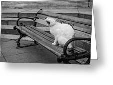 Cat On A Bench Greeting Card