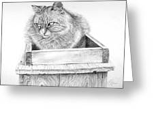 Cat On A Box Greeting Card