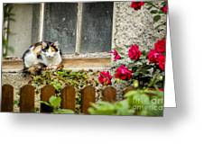 Cat On A Sill Greeting Card