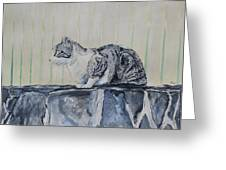 Cat On A Stone Wall Greeting Card