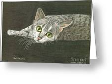 Cat On Black Greeting Card by Bill Hubbard