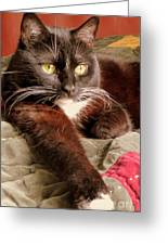 Cat On Velvet Greeting Card by Maria Scarfone