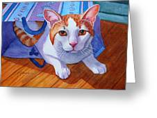 Cat Out Of The Bag Greeting Card