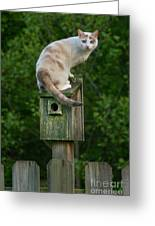 Cat Perched On A Bird House Greeting Card