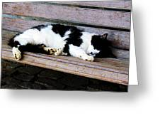 Cat Sleeping On Bench Greeting Card