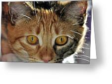 Cat Stare Down Greeting Card