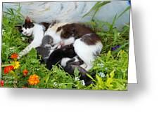 Cat Suckling Greeting Card
