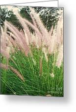 Cat Tails Greeting Card