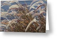Cat-tails Greeting Card