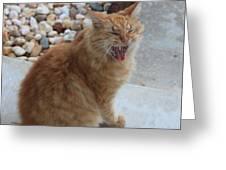 Cat Talk Greeting Card by Ella Char