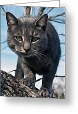 Cat Tree Greeting Card