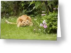 Cat Watching Prey Greeting Card