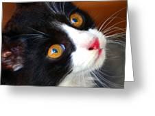 Innocent Kitten Greeting Card