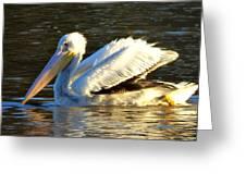 Catahoula Pelican Greeting Card
