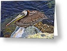 Catalina Pelican Greeting Card