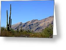 Catalinas Greeting Card