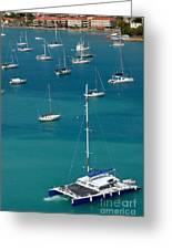 Catamaran  St Thomas Usvi Greeting Card by Amy Cicconi