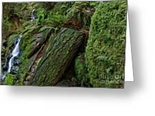 Cataracts Canyon Mossy Log  Greeting Card