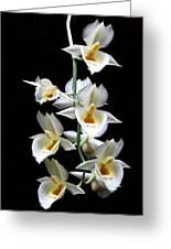 Catasetum Pileatum Orchid  Greeting Card