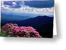 Catawba Rhododendron In Bloom, Yellow Greeting Card