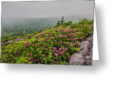 Catawbas And Fog Greeting Card