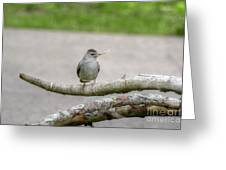 Catbird And Nest Material Greeting Card