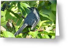 Catbird Greeting Card