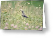 Catbird In The Wildflowers Greeting Card