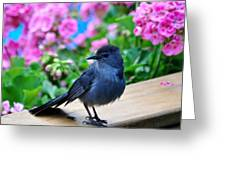 Catbird On Hunt Greeting Card