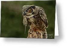 Catch Of The Day - Great Horned Owl  Greeting Card by Inspired Nature Photography Fine Art Photography