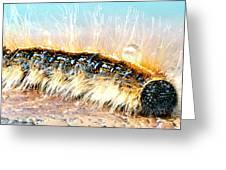 Caterpillar-01 Greeting Card