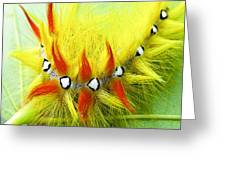 Caterpillar 2 Greeting Card