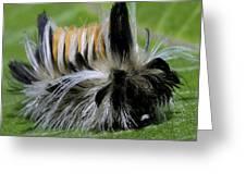 Caterpillar 22 Greeting Card