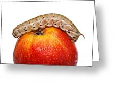 Caterpillar On The Apple. Greeting Card