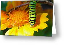 Caterpillar On The Prowl Greeting Card